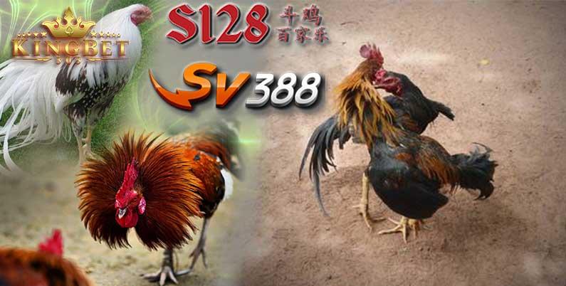 Game Sabung Ayam Sv388 Terbaik Main Sini! | Kingsv388.biz