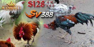 Deposit Sv388 Murah