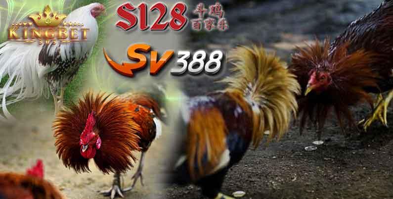 Sabung Ayam Sv388